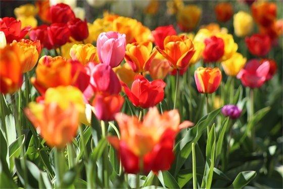 Photo of spring flowers by Kristina Rogers via Unsplash.