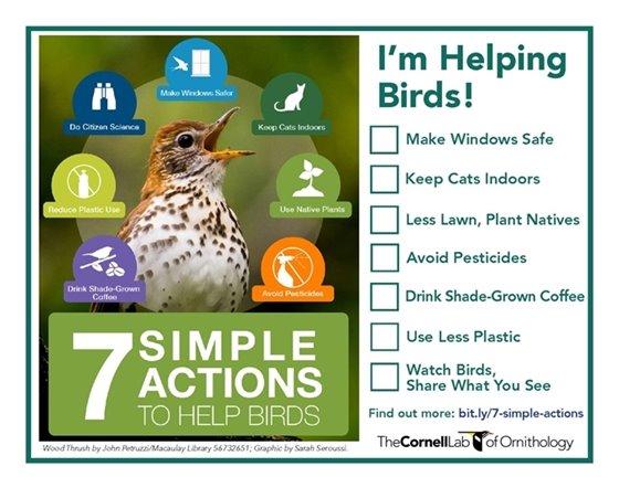 Helping Birds
