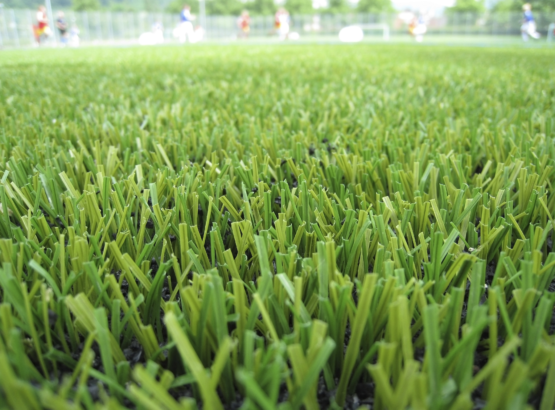 An upclose image of turf